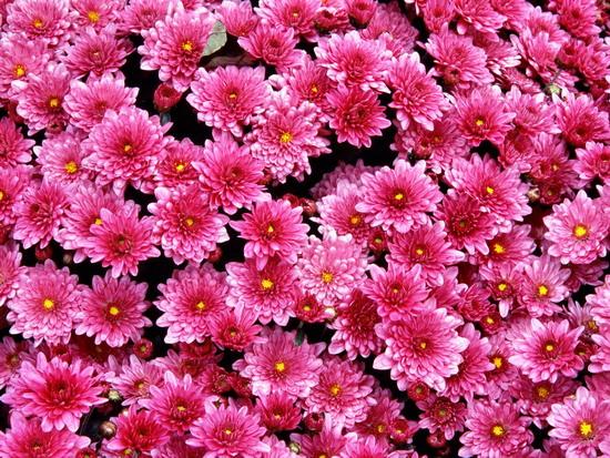 Ankara gölbasi göl çiçekçi ve dügün organizasyonu çiçekçilik