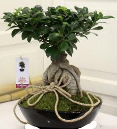 Japon ağacı bonsai satışı  Çiçekçi Gölbaşı çiçekçi mağazası