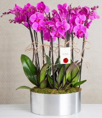 11 dallı mor orkide metal vazoda  Gölbaşı çiçek gönder cicekciler , cicek siparisi