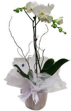Tek dallı beyaz orkide  Gölbaşı Ankara çiçek yolla