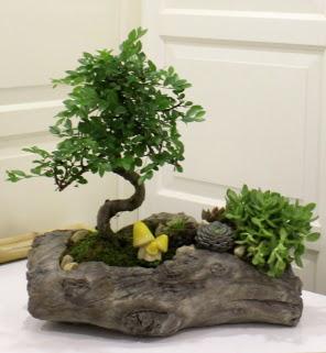 Ağaç kütük içerisinde bonsai ve sukulent  Gölbaşı çiçek gönder cicekciler , cicek siparisi
