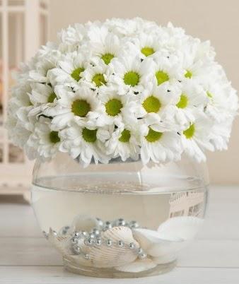 Fanusta beyaz Papatya  Ankara Gölbaşı hediye sevgilime hediye çiçek