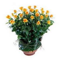 Ankara Gölbaşı çiçek gönderme  10 adet sari gül tanzim cam yada mika vazoda çiçek