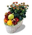 Ankaradaki çiçekçiler Gölbaşı cicek , cicekci  meyva sepeti ve kalanche