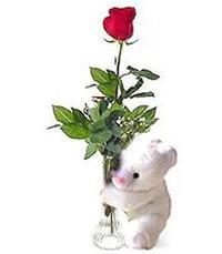 oyuncak ve gül tanzim   Ankara Gölbaşı internetten çiçek siparişi