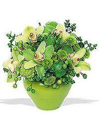 cam yada mika vazoda 5 adet orkide   Ankara Gölbaşı çiçek siparişi vermek