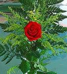 1 adet kirmizi gül buketi   Ankara çiçekçi Gölbaşı İnternetten çiçek siparişi