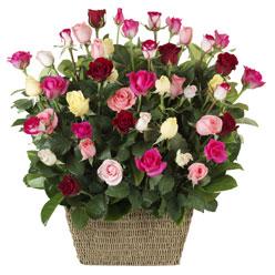 41 adet karisik gül sepeti   Ankara çiçekçi Gölbaşı İnternetten çiçek siparişi
