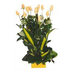12 adet beyaz gül aranjmani  Çiçek yolla Gölbaşı internetten çiçek satışı