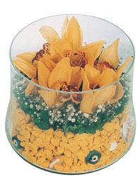 Gölbaşı çiçek yolla online çiçekçi , çiçek siparişi  cam fanus içerisinde 3 adet kandil orkide