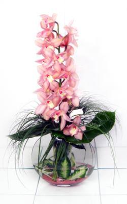 Gölbaşı çiçek yolla , çiçek gönder , çiçekçi   cam içerisinde tek dal orkide