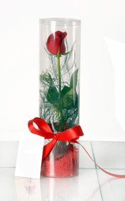 Ankara Gölbaşı çiçekçi uluslararası çiçek gönderme  Silindir vazoda tek kirmizi gül