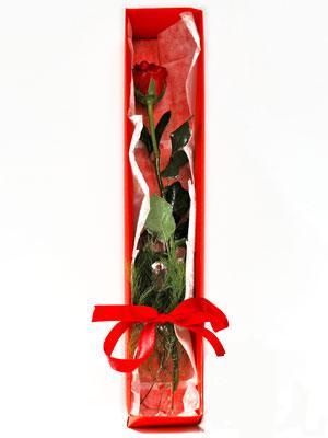 Ankara Gölbaşı internetten çiçek siparişi  1 adet kutuda gül