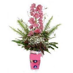 ankara Gölbaşı çiçek mağazası , çiçekçi adresleri  cam yada mika vazo içerisinde tek dal orkide çiçegi