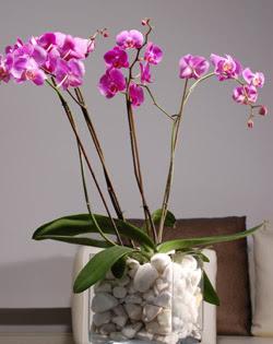 Gölbaşı çiçekçi güvenli kaliteli hızlı çiçek  2 dal orkide cam yada mika vazo içerisinde