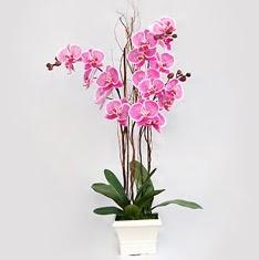 Ankara Gölbaşı çiçek gönderme  2 adet orkide - 2 dal orkide