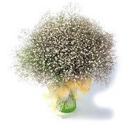 Gölbaşı çiçekçiler  çiçek siparişi sitesi  cam yada mika vazo içerisinde cipsofilya demeti