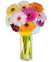 Gölbaşı çiçek yolla , çiçek gönder , çiçekçi   Farkli renklerde 15 adet gerbera çiçegi