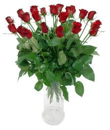 Gölbaşı anneler günü çiçek yolla  11 adet kimizi gülün ihtisami cam yada mika vazo modeli
