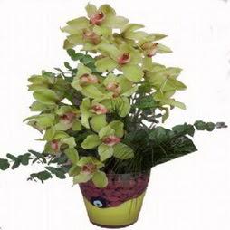 2 dal orkide  Ankaradaki çiçekçiler Gölbaşı cicek , cicekci  cam vazo içerisinde çiçek model