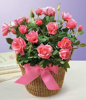 Anneme 12 adet sepet içerisinde kirmizi gül  Ankara Gölbaşı 14 şubat sevgililer günü çiçek