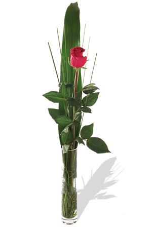 1 adet cam vazo içerisinde kirmizi gül  Gölbaşı çiçek online çiçek siparişi