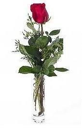 Vazo içerisinde 1 adet kirmizi gül  Ankara Gölbaşı çiçek gönderme