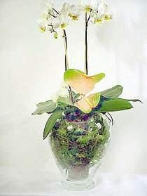 Ankara Gölbaşı hediye sevgilime hediye çiçek  Cam yada mika vazoda özel orkideler