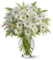 Vazo içerisinde beyaz krizantem çiçekleri  Gölbaşı çiçek kaliteli taze ve ucuz çiçekler