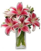 Vazo içerisinde 5 dal kazablanka çiçeği  Ankara Gölbaşı çiçek gönderme