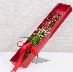 Kutu içerisinde 3 adet kırmızı gül  Gölbaşı ankara çiçek gönderme sitemiz güvenlidir