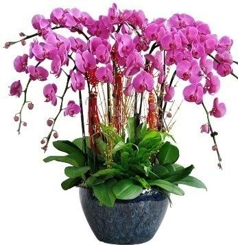 9 dallı mor orkide  Ankara Gölbaşındaki çiçekçiler ankara çiçek satışı