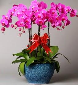 7 dallı mor orkide  Ankara Gölbaşı hediye çiçek yolla