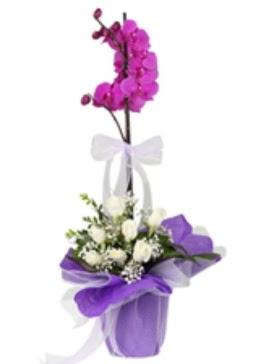 1 dal mor orkide ve 11 adet beyaz gül  Ankara Gölbaşındaki çiçekçiler ankara çiçek satışı