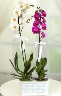 1 mor 1 dal beyaz İthal orkide sepet içerisinde  Gölbaşı çiçekçiler  çiçek siparişi sitesi