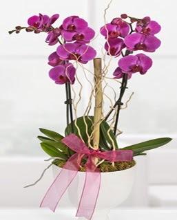 2 dallı nmor orkide  Gölbaşına çiçek , çiçekçi , çiçekçilik
