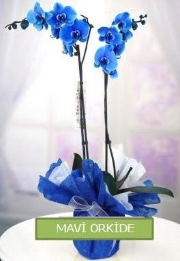 2 dallı mavi orkide  Gölbaşı çiçek yolla online çiçekçi , çiçek siparişi