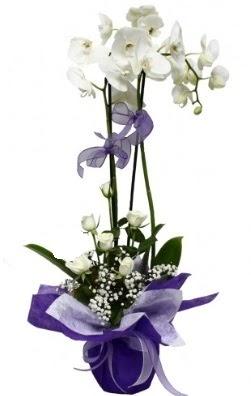 2 dallı beyaz orkide 5 adet beyaz gül  Gölbaşı çiçek kaliteli taze ve ucuz çiçekler