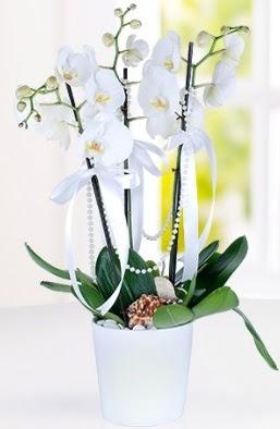 3 dallı beyaz orkide  Ankara Gölbaşı çiçekçi uluslararası çiçek gönderme