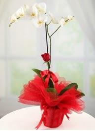 Tek dal beyaz orkide tek dal kırmızı gül  Gölbaşı çiçek siparişi yurtiçi ve yurtdışı çiçek siparişi