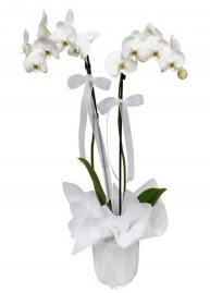 2 dallı beyaz orkide  çiçek siparişi Gölbaşı çiçekçiler