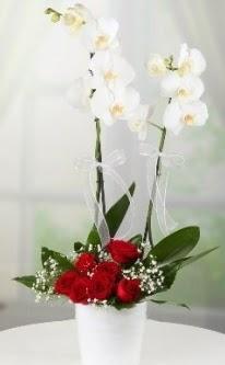 2 dallı beyaz orkide 7 adet kırmızı gül  Ankara Gölbaşındaki çiçekçiler ankara çiçek satışı