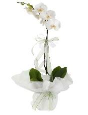 1 dal beyaz orkide çiçeği  Ankara çiçekçi Gölbaşı İnternetten çiçek siparişi
