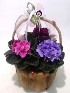 Sepet içerisinde 3 adet menekşe  Gölbaşına çiçek , çiçekçi , çiçekçilik