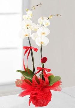 2 dallı beyaz orkide ve 1 adet kırmızı gül  Gölbaşına çiçek , çiçekçi , çiçekçilik