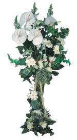 Gölbaşı çiçekçiler  çiçek siparişi sitesi  antoryumlarin büyüsü özel