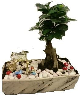 Japon ağacı bonsai satışı  Gölbaşına çiçek , çiçekçi , çiçekçilik
