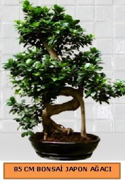 85 CM Japon ağacı Bonsai saksı bitkisi  Gölbaşı ankara çiçek servisi , çiçekçi adresleri