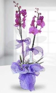 Çift dallı mor orkide LİKE MARKADIR  Gölbaşına çiçek , çiçekçi , çiçekçilik