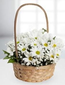 Sepet içerisinde papatya çiçeği  Ankara Gölbaşındaki çiçekçiler ankara çiçek satışı